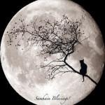el samhain era el final del verano celta.  la festividad del final de año donde debía honrarse a los ancestros